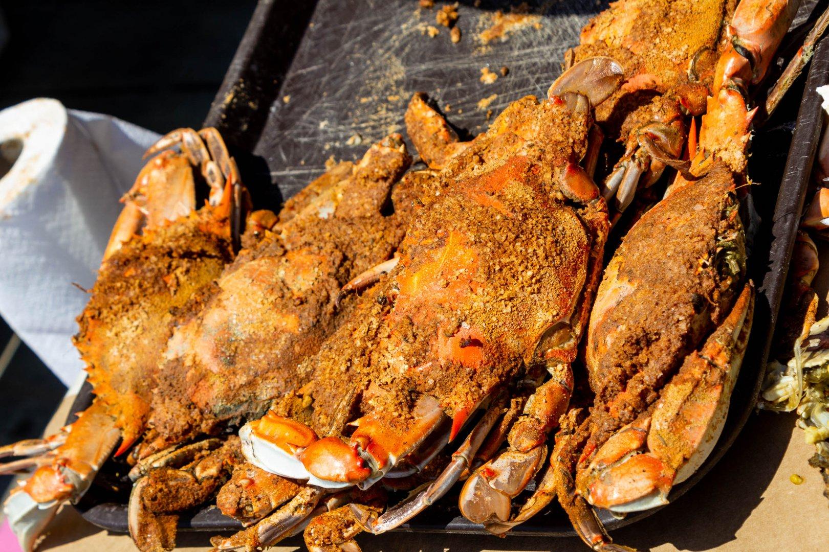 11 Jetty crabs_web_size.jpg