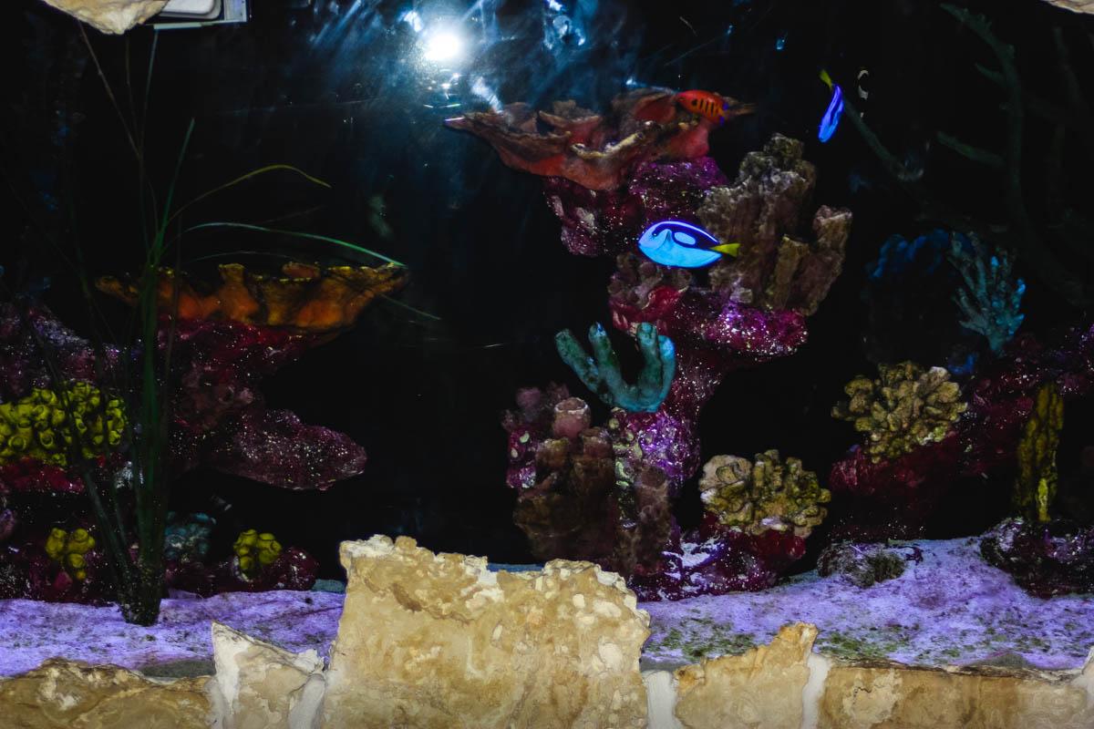 17  dive aquar_web_size.jpg