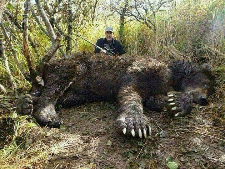 Big bear ass
