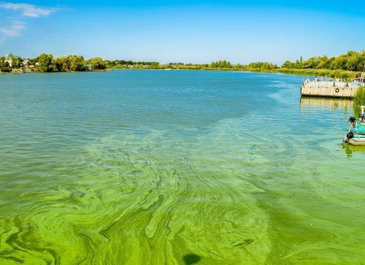 Algae bloom image #1.jpeg