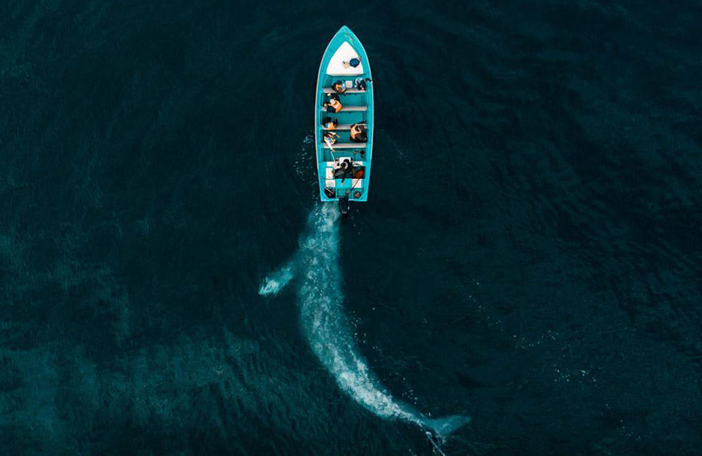 Article-Image-DronePhotos-Gray-Whale-Play-Pushing-Tourists-1.jpg