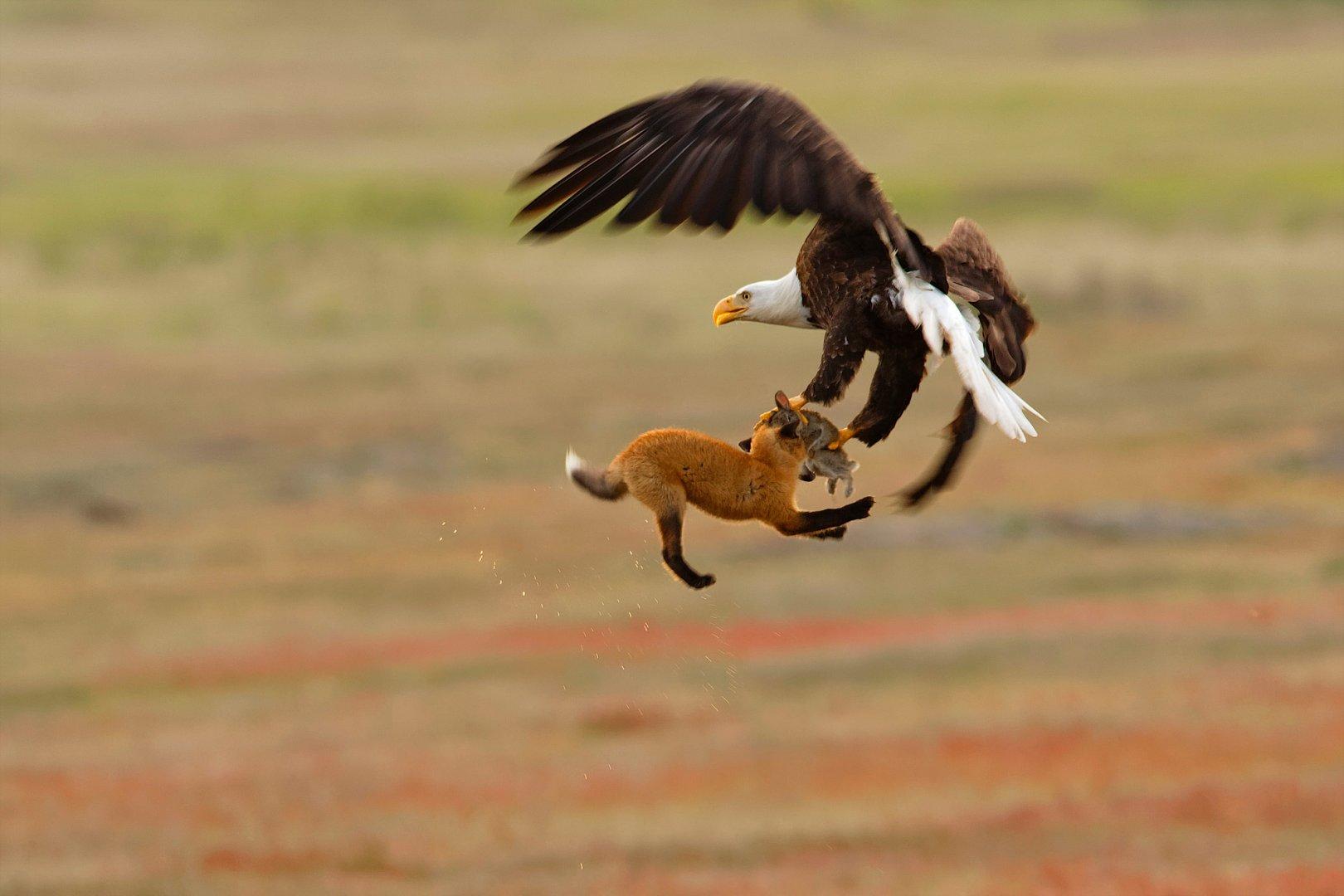AudubonPhotographyAwards_06.jpg