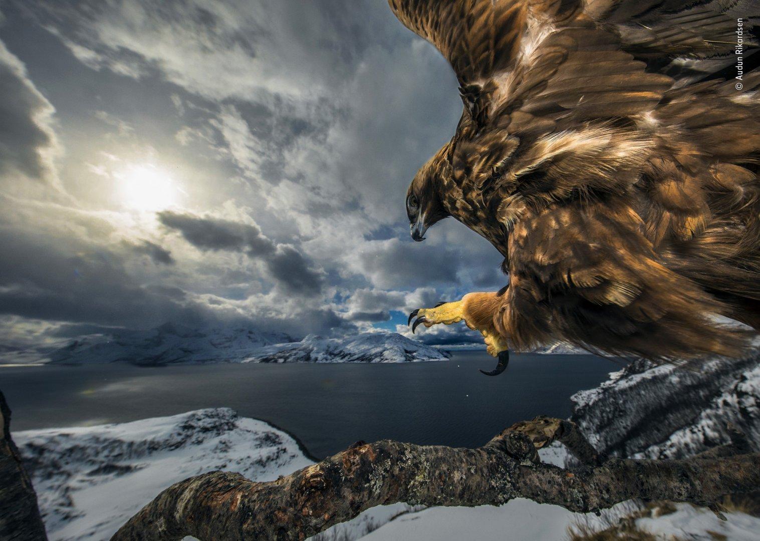 Audun-Rikardsen-Wildlife-Photographer-of-the-Year.jpg