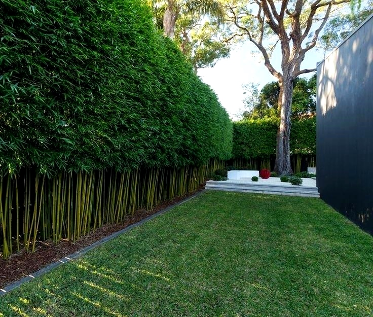 Best Tree Hedge For A Privacy Screen Aka Great Wall Of China