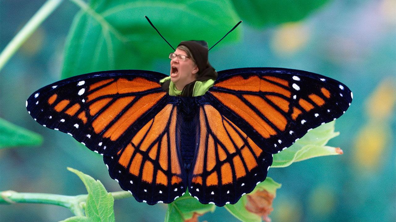 butterfly liberal.jpg