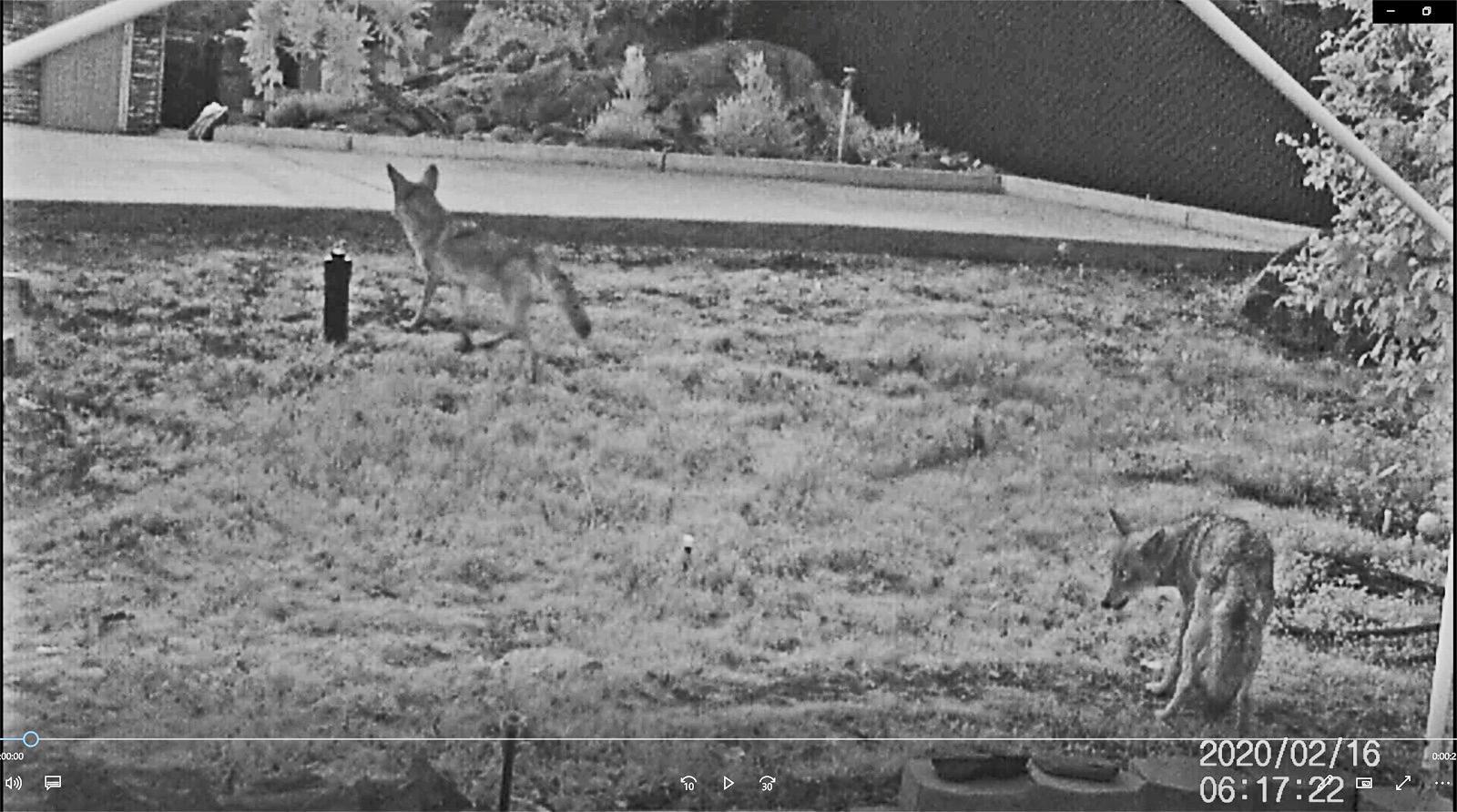 Coyote Pari 2-16-20 -1.jpg