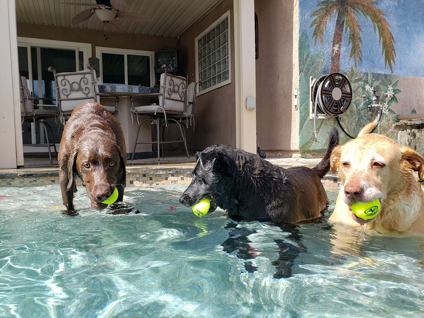 dogs in moval pool.jpg