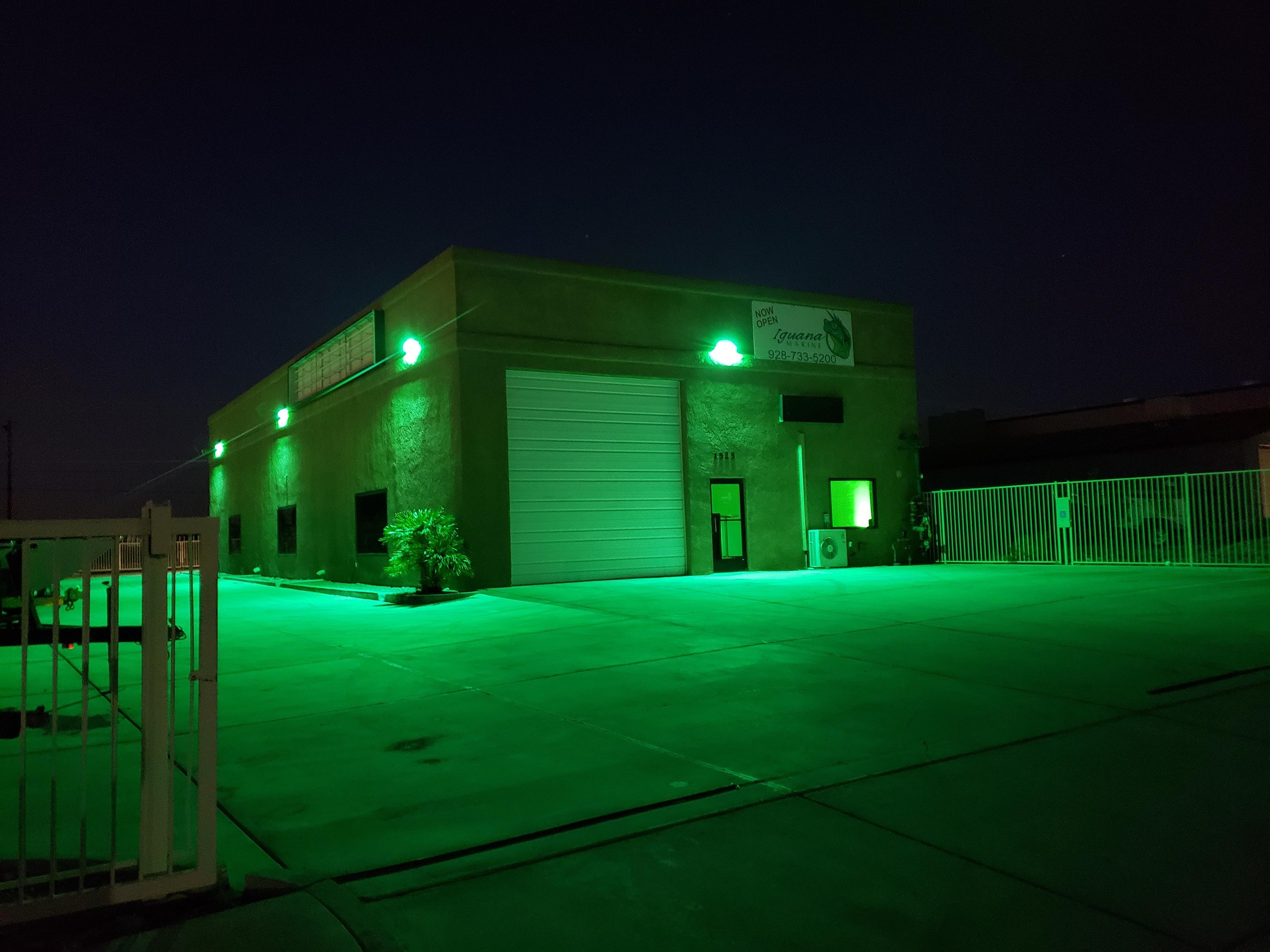 Iguana Outside Night.jpg