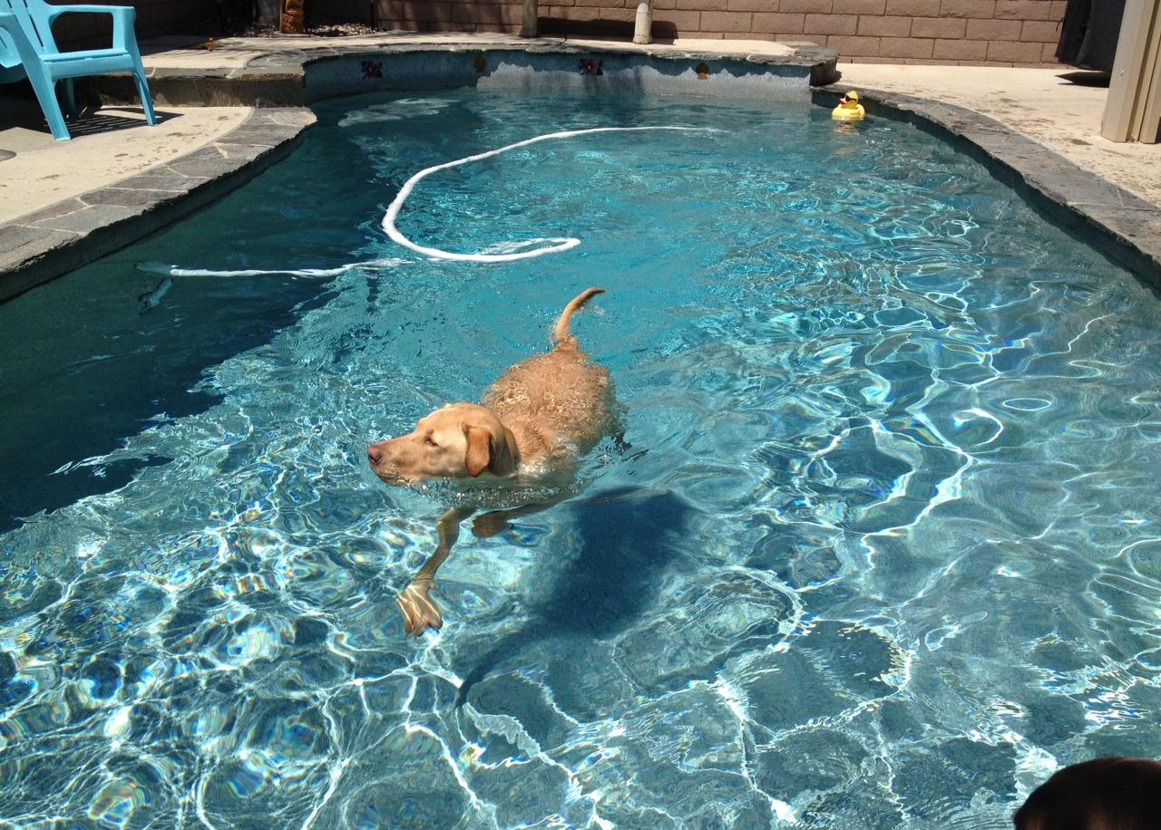 jax in the pool.JPG