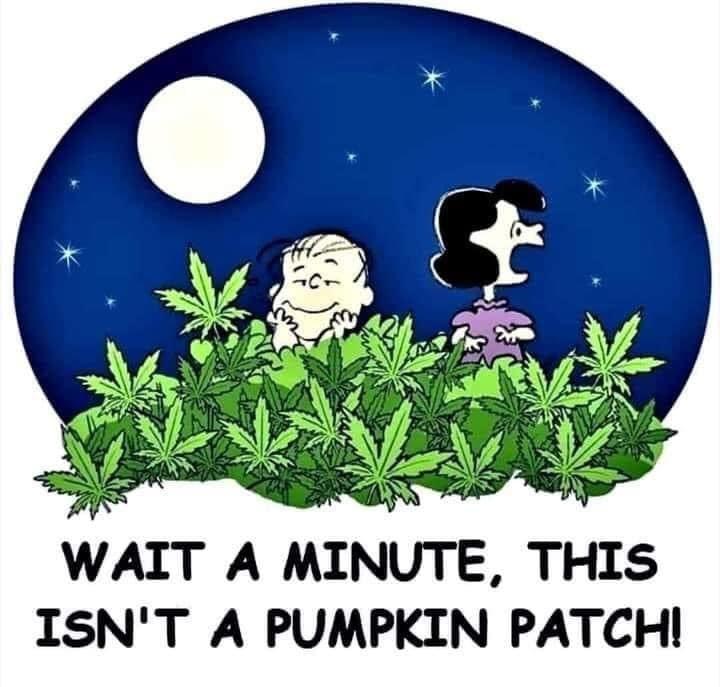 pumpkin_patch_c08ea1ce074a5c9fb69268e216d4ca2860b05609.jpg