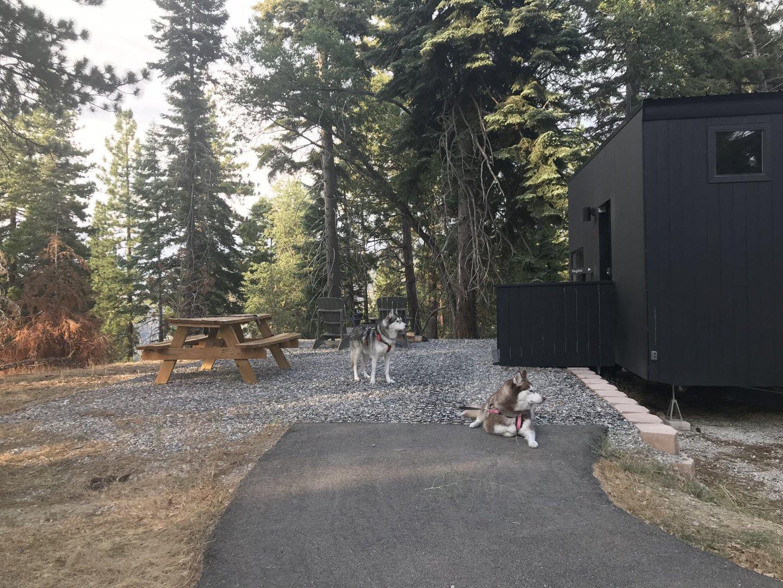 Pups Camping.jpg