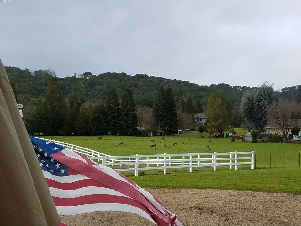 ranch flag.jpg