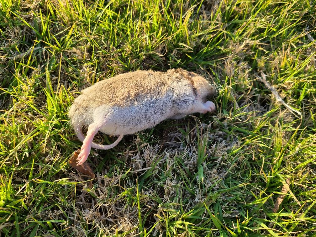 rats2.jpg