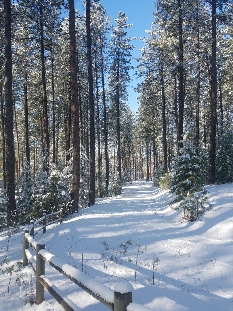 snow trail.jpg