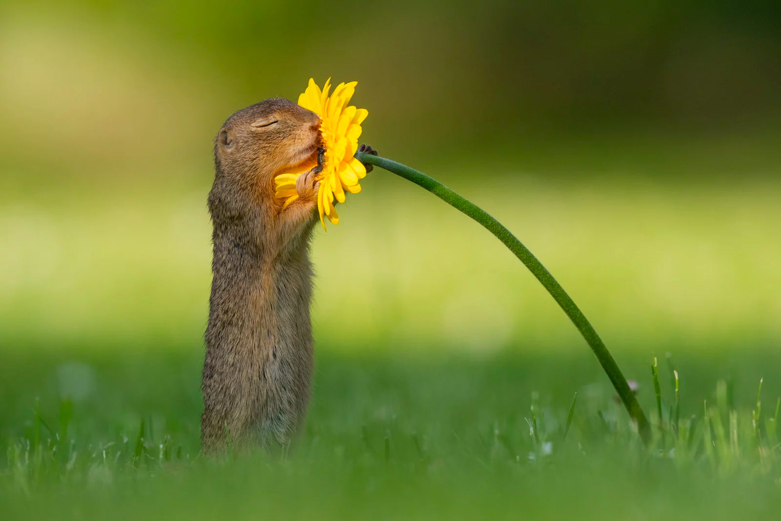 squirrel-4.jpg