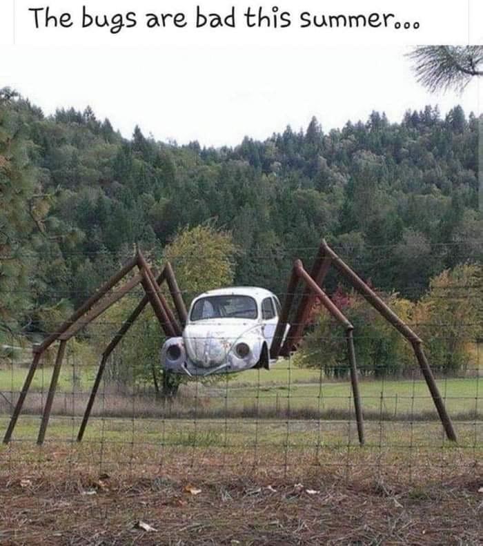Summer bugs.jpg