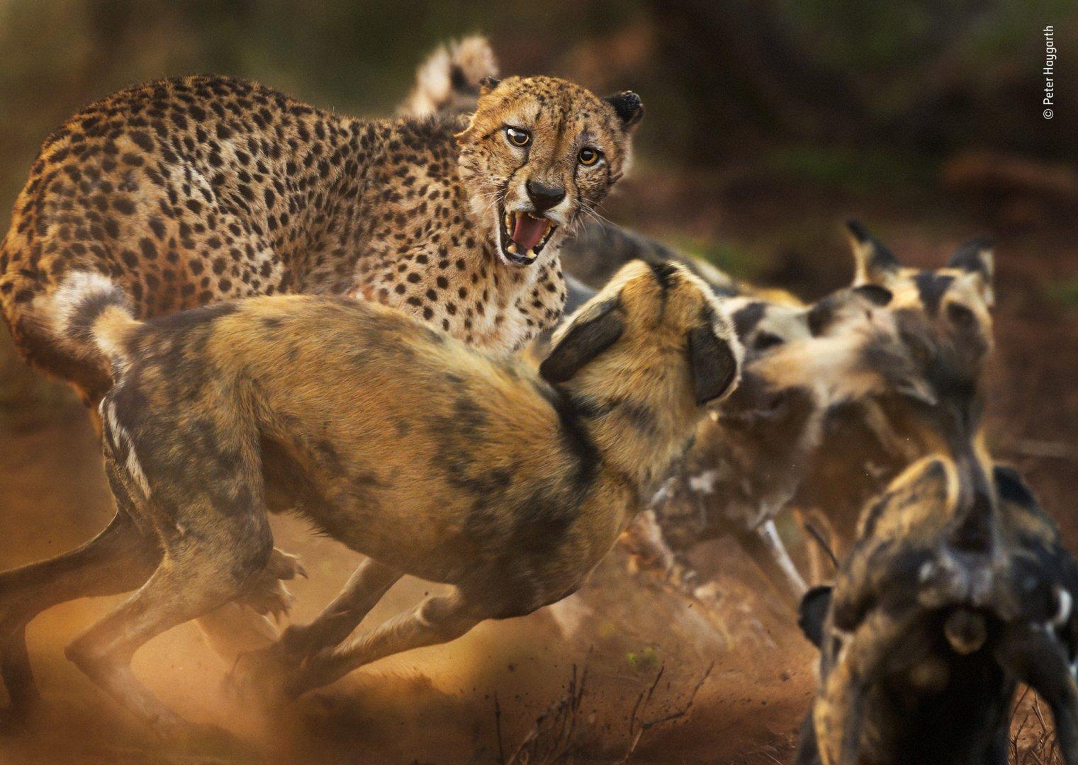 wildlife-Peter-Haygarth.jpg
